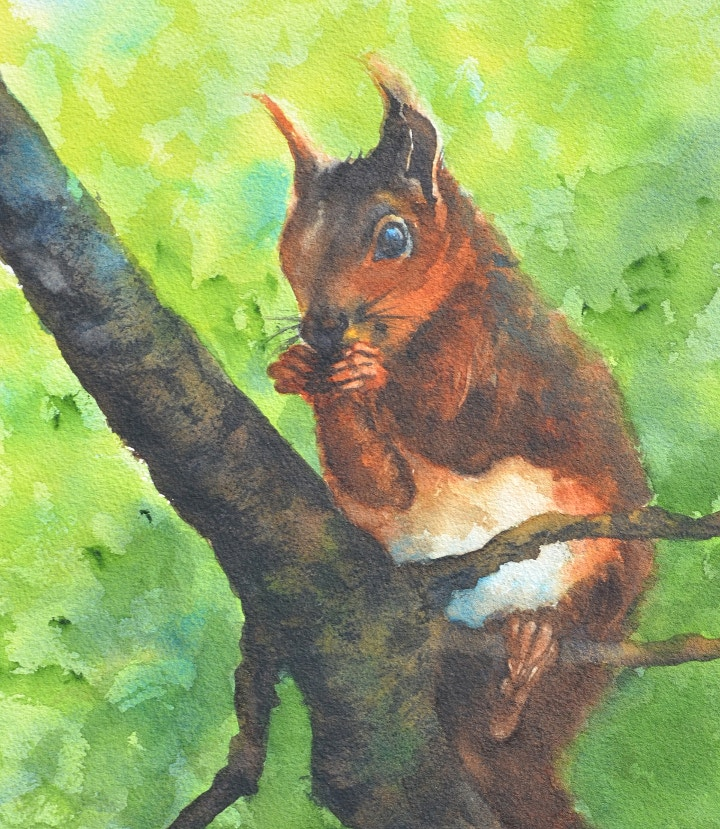 Red Squirrel Watercolour