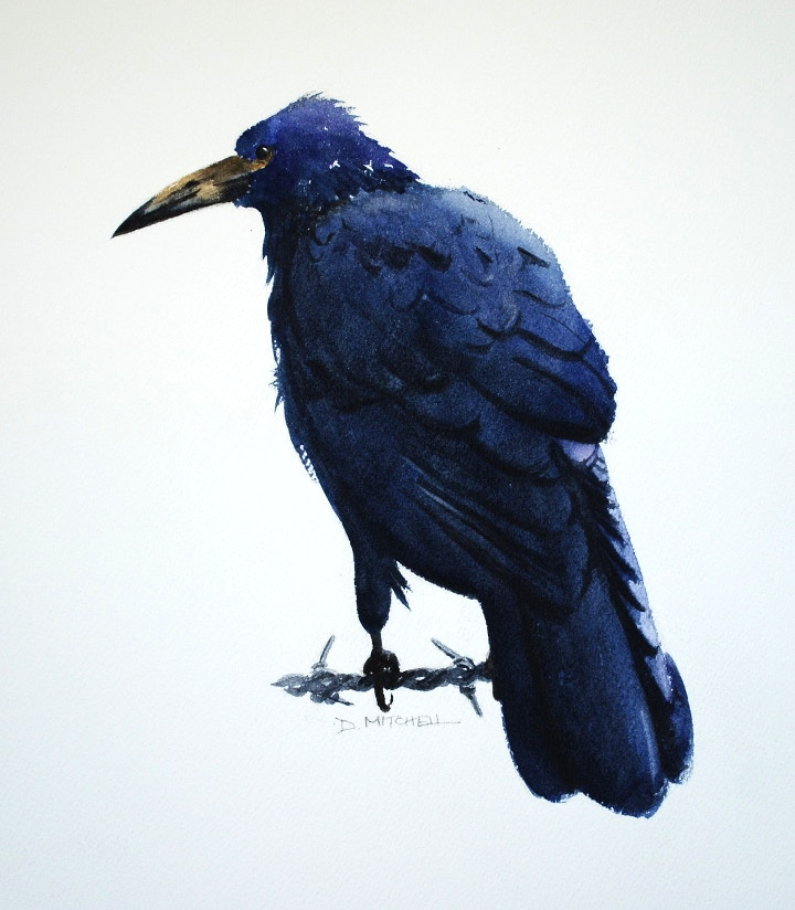 Rook Watercolour Painting