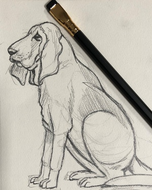 Drawing Pencil Cats and Dogs for Beginners